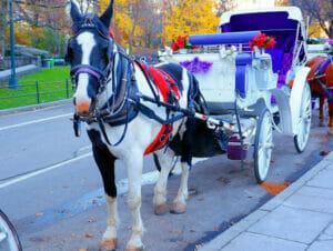 Hevosajelu Central Parkissa
