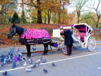 Hevosajelu New Yorkin Central Parkissa