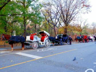 Hevosajelu Central Parkissa - hevosajelulla