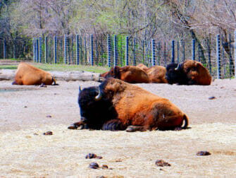 Bronx Zoo New Yorkissa - Eläimiä lepäämässä