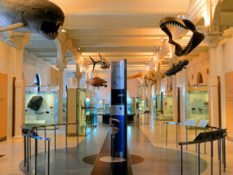 American Museum of Natural History New Yorkissa - Empty Tour