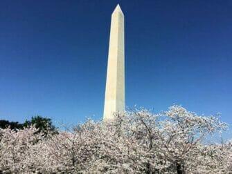 Washington DC päivämatka - Monumentti
