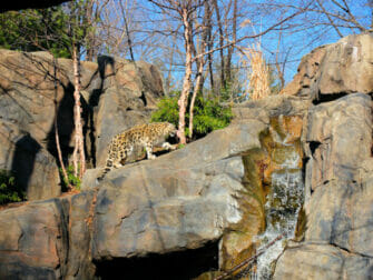 Central Park Zoo liput - lumileopardi