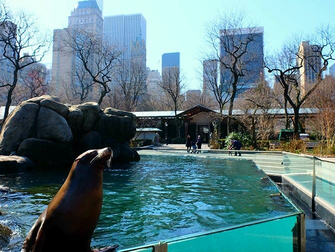 Central Park Zoo liput