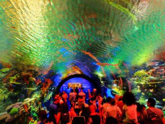 New York Aquarium - Koralliriutta